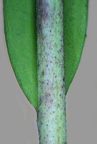 茎の基部と茎の拡大